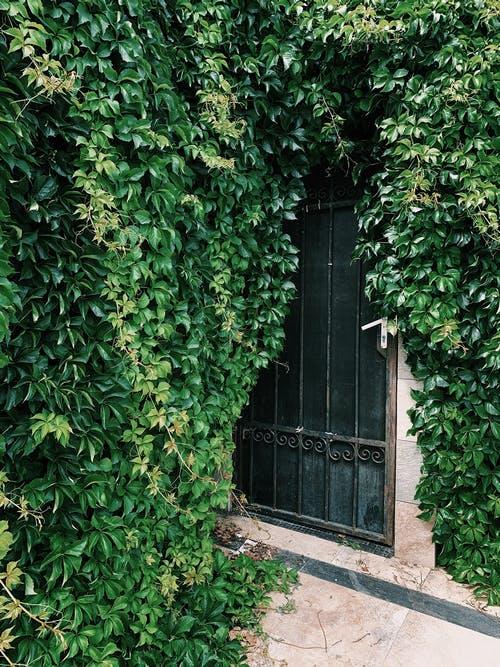 Thuja Smaragd bij Haagplanten Heijnen